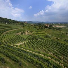 Slovinsko: malá země, velká vína